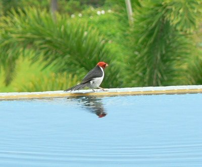 Bird15