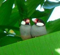 Bird105_2