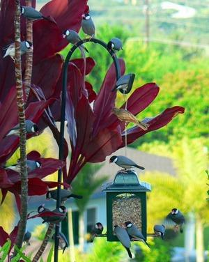 Bird10_2