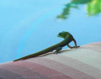Gecko2_2
