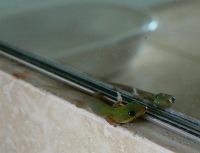 Gecko_4