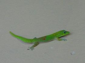 Gecko8191