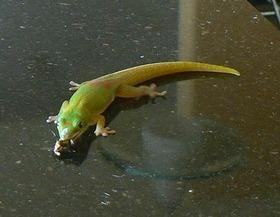 Gecko920_2
