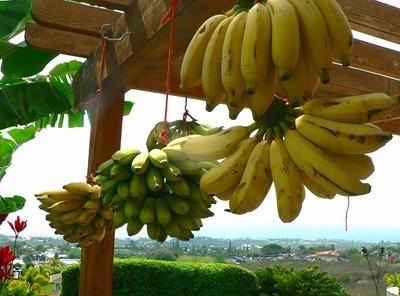 Banana922