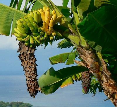Banana9222