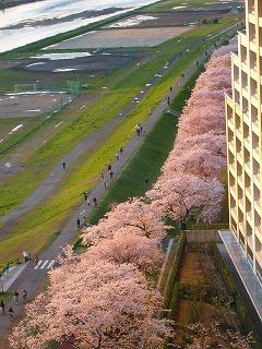 Tokyo_014