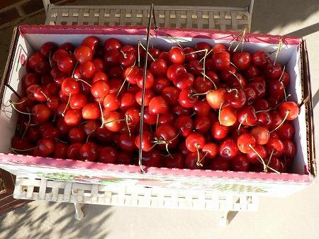 Cherry22